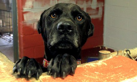 Shelters suffer when animals are abandoned