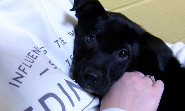 Pawmetto Lifeline adds neonatal unit for kittens, puppies