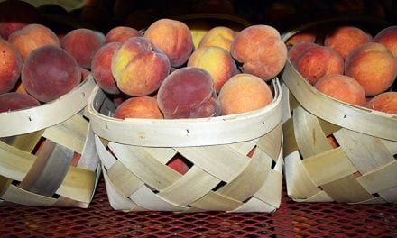 After bumper 2018 harvest, peach farmers prepare for next spring