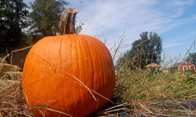 It's Fall Y'all! Pumpkin patches, corn mazes and more are here!