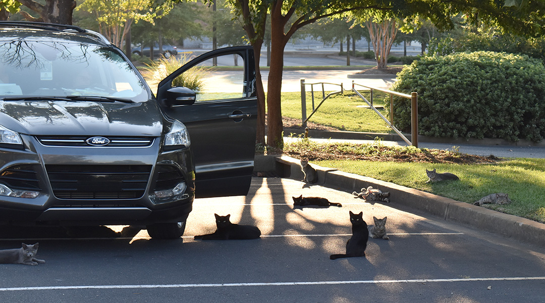 Why feral cats remain on the prowl
