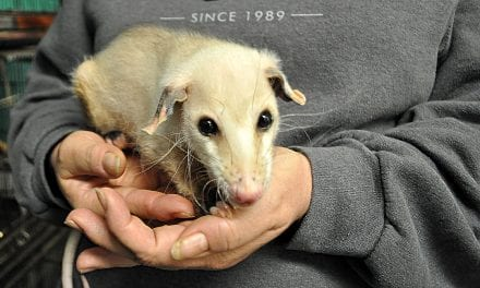 Carolina Wildlife Center aims to keep animals safe