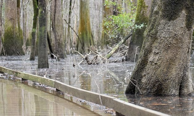 Weekend flood warnings issued for Congaree River