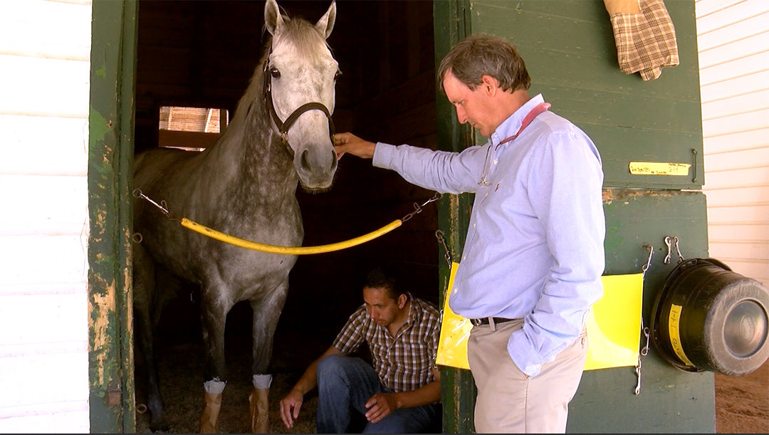 After steeplechase falls, experts examine horse racing safety