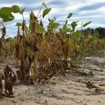 South Carolinia farmers brace for continued drought conditions