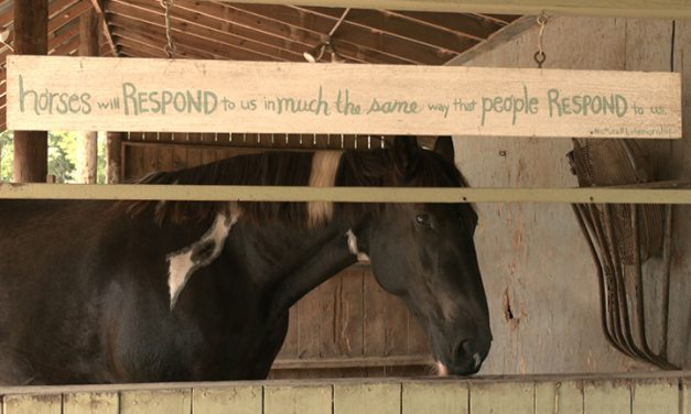 Horses, dogs offer emotional assistance to those facing stress
