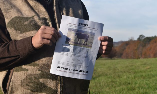Horse attacks in Carolinas alarm law enforcement