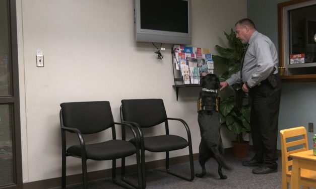 On Queue: Computer-savvy dog sniffs out evidence to convict child abusers