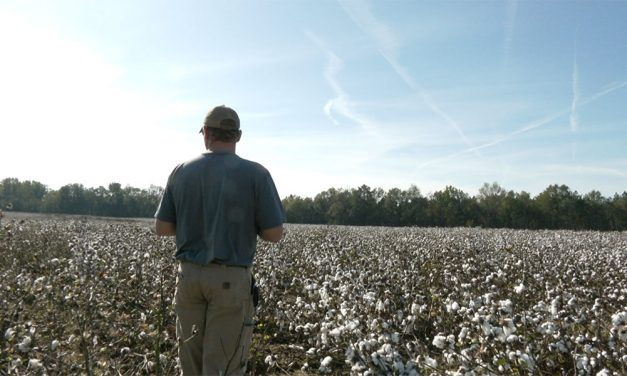 Despite federal aid, South Carolina farmers still struggle