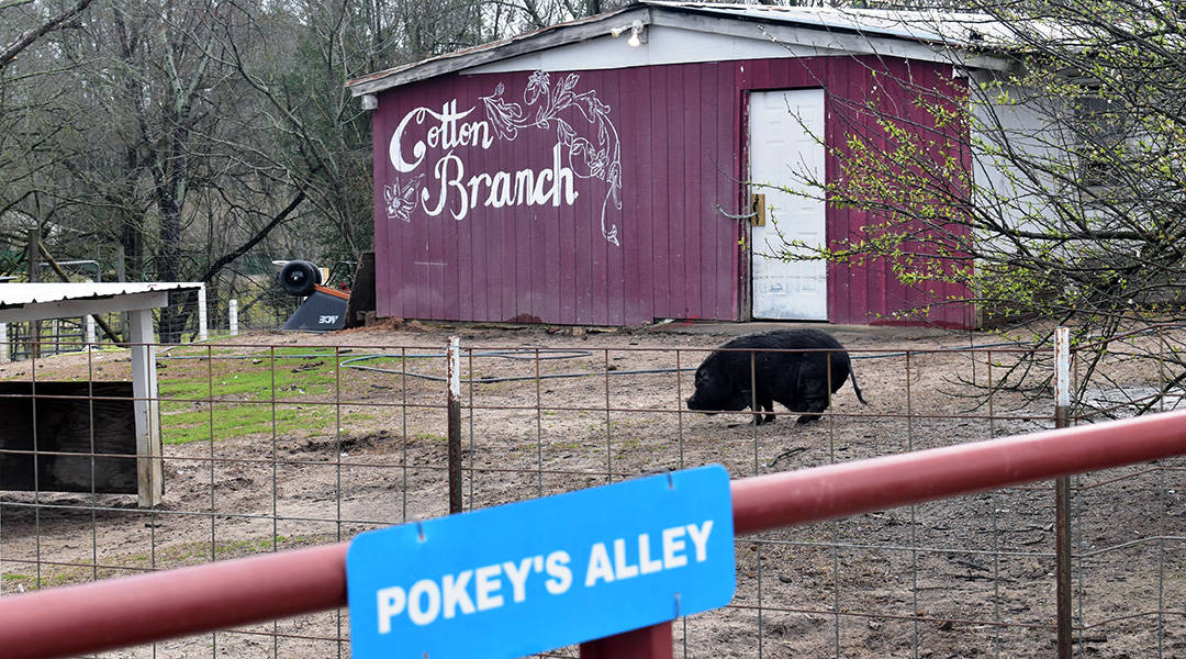 Sanctuary aims to rescue farm animals, educate people