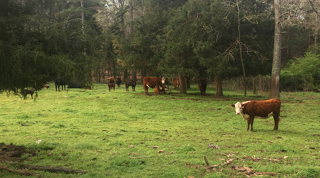Farm life endures during pandemic