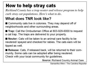 Graphic on stray cats