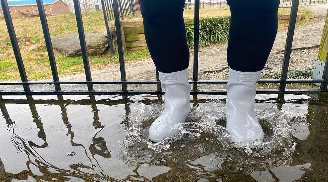 Above-average precipitation brings the rainy blues to Columbia