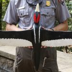 An ode to the Ivory-billed Woodpecker, savior of Congaree
